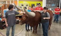 Texas Man Brings Bull to Shop to Test 'All Pets Welcome' Policy