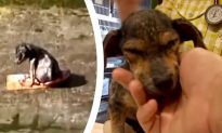 Terrified Dog Rescued From 30Ft Canal