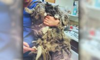 Ditched Cat With Seriously Matted Fur Gets Adopted After Much-Needed Shave