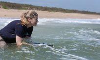 National Aquarium Releases Rescued Sea Turtles Back to the Ocean