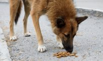 Mexican City Installs Gravity-Fed Dog Food Dispensers for City's Huge 300,000 Stray Dog Population