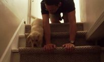 Nervous Puppy's Afraid to Go Downstairs, So Loving Owner Crawls to Teach Him