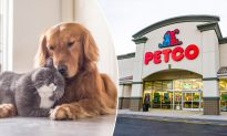 No More Artificial Ingredients in Pet Food! Petco Plans Healthier Choices for Furry Mates