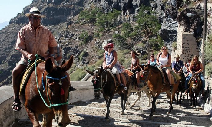 Donkeys ferrying tourists to Fira, on the Greek island of Santorini on July 6, 2007. (Sakis Mitrolidis/AFP/Getty Images)