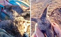 Viral Video Shows Man Fends Wild Dogs Off With a Stick to Rescue Dying Kangaroo