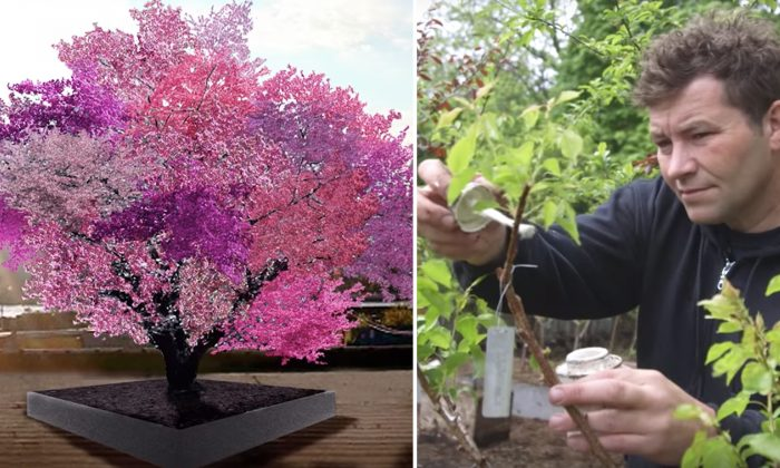 One Tree, 40 Different Fruits? Syracuse Art Professor Is Changing Gardening Expectations