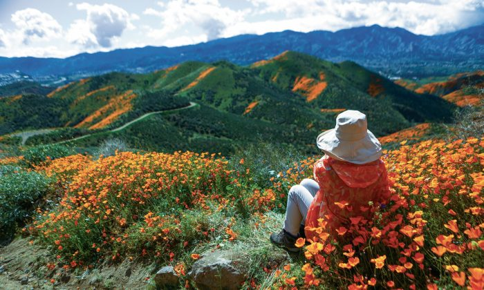 Between the likes, follows, and tweets, it can be hard to remember to stop and smell the flowers. (Mario Tama/Getty Images)