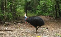 Razor-clawed Cassowary That Killed Florida Man Is Put to Auction
