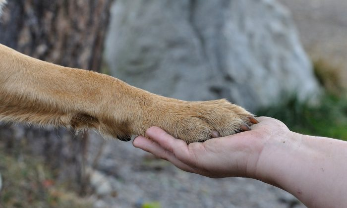 File photo of a dog paw held by a human hand. (Pixabay)
