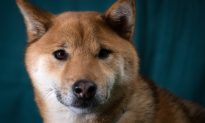 Student Tortures Caged Dog, University Suspected of Concealing Abuse