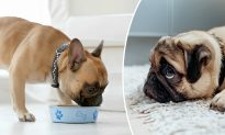 Animal Behavior Study Discovers Your Dog May Be Lying to You!