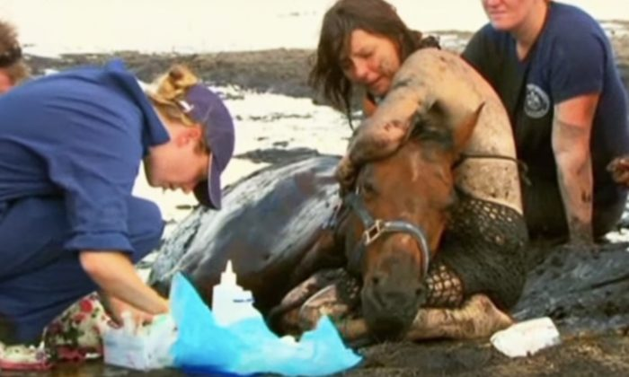 Woman Rushes to Rescue 1000lb Horse Stuck in Deep Ditch As High Tide Approaches