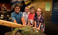 Pounamu: New Zealand's Beloved Greenstone