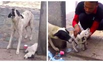 Mama Dog Frantically Cries Over Her Wounded Puppy, Kind-Hearted People Respond to Her Call