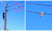 Kitten Uses Power Line as Tightrope to Elude Rescuers