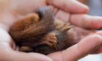 Dying Little Critter Rescued from Street Surprises All After Growing Up