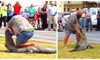 Video: Florida Man Subdues and Captures 10-ft Alligator on School Lawn