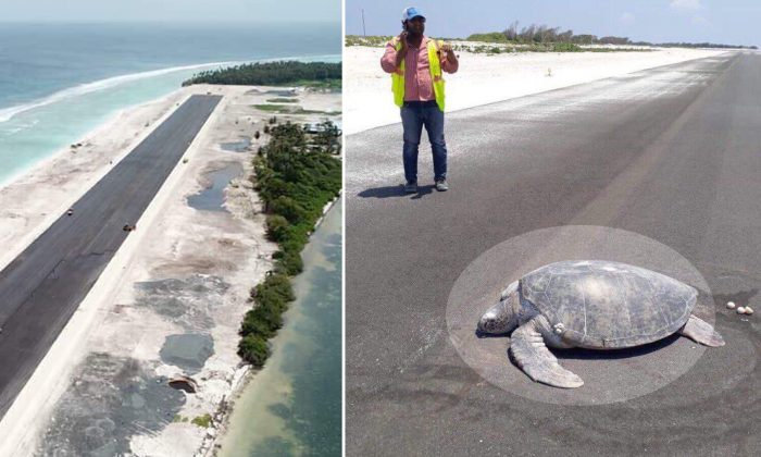 Sea Turtle Returns to Nesting Beach to Lay Eggs, but Finds an Airstrip Instead