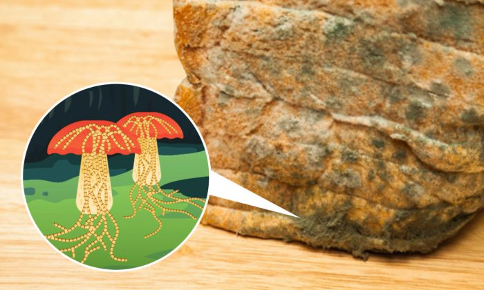 Want to Eat Bread After the Mold Has Been Cut Off? Here's Why You Should Never Do It
