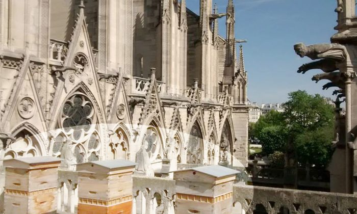 Un-Bee-Livable! Some 180,000 Bees Living Atop Roof of Notre-Dame Survived Tragic Fire