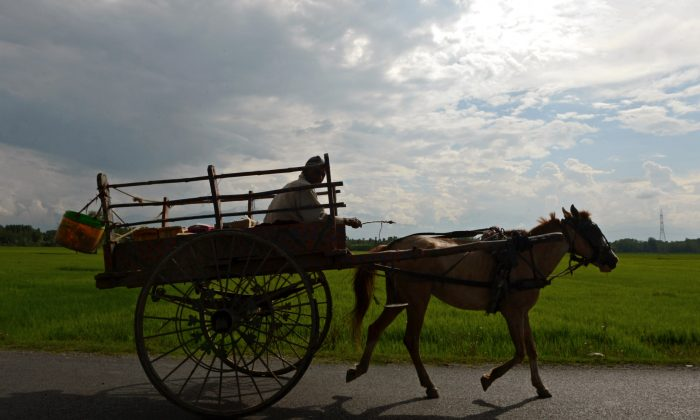 An Indian Kashmiri farmer rides a horse cart after a day's work on the outskirts of Srinagar on August 4, 2015. TAUSEEF MUSTAFA/AFP/Getty Images