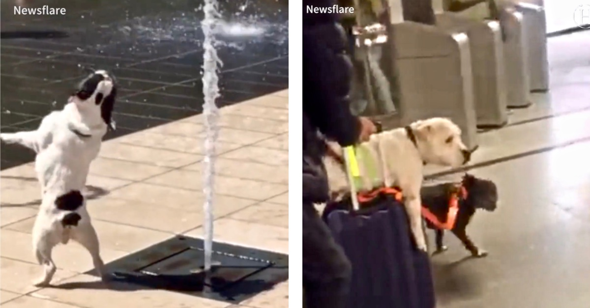 Video: These Dogs Prove They're Simply Too Adorably Stupid for Their Own Good