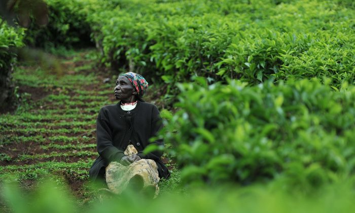 Elizabeth Wamaitha, 79,  who was detained in a British-run  labor camp for three years with her baby after her husband joined the Mau Mau forces in the sprawling forests in the foothills of snowcapped Mount Kenya, sits on November 4, 2011 in a tea plantation near Nyeri. (Tony Karumba/AFP/Getty Images)