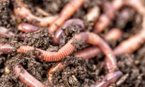 Styrofoam-Eating Worms Could Hold the Solution to Planet's Plastic Waste Worries