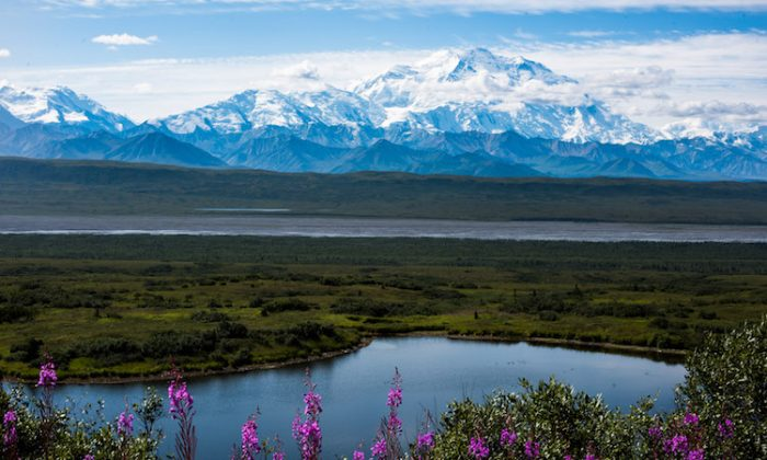 Denali is North America's tallest mountain, at 20,310 feet. (National Park Service)