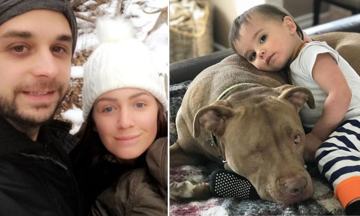 Parents Can't Make Baby With Bad Flu Feel Better, Then Rescued Pitbull Enters