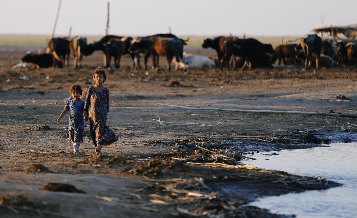 Iraqi Marsh Arab girls walk near buffaloes at the Chebayesh marsh in Dhi Qar province