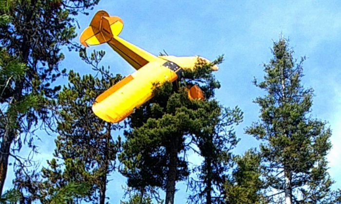 Pilot Rescued From Plane That Crash-Landed Atop Idaho Tree