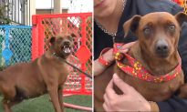 This pregnant dog has been homeless for months