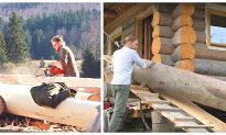 Video: Building A Log Cabin From Scratch!