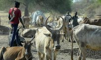 Woman Beaten to Death by Family for Refusing to Marry for 40 Cows