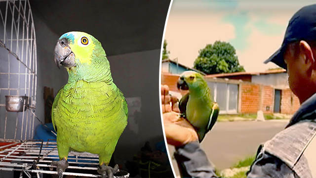 Parrot Owned by Drug Dealers Tips Off Police During a Raid, and Is Now in Custody