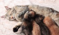 Heroic Cat Walks Through Fire to Rescue Her 5 Kittens from Brooklyn Garage Fire