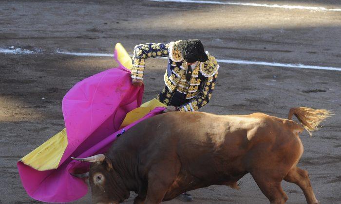 "A stock photo shows Spanish matador Manuel Jesus  ""El Cid"" performs a pass on a Jandilla stud bull during a corrida at the Vista Alegre bullring on Aug. 25, 2015.  (Ander Gillenea/AFP/Getty Images)"