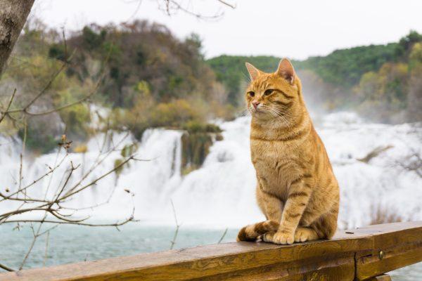 cat at krka national park waterfall in croatia