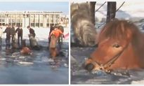 Onlookers Bravely Rescue Horses and Riders After They Break Through Ice