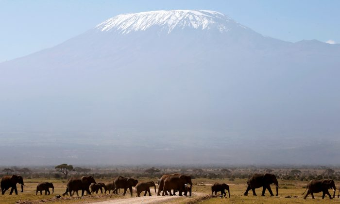 Mount Kilimanjaro looms in the distance, as elephants walk in Amboseli National Park on Jan. 26, 2015. (REUTERS/Goran Tomasevic)