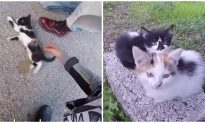 Bikers Rescue Injured Kitten