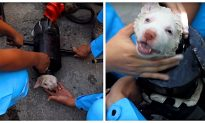 Video: Puppy Gets Stuck in Exhaust Pipe and Has to Be Rubbed in Shampoo to Be Freed