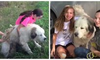 Family Adopts Abandoned Dog on Side of Road