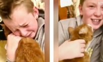 Video: Boy Lost It When He Reunited With Cat Who Had Gone Missing for 7 Months