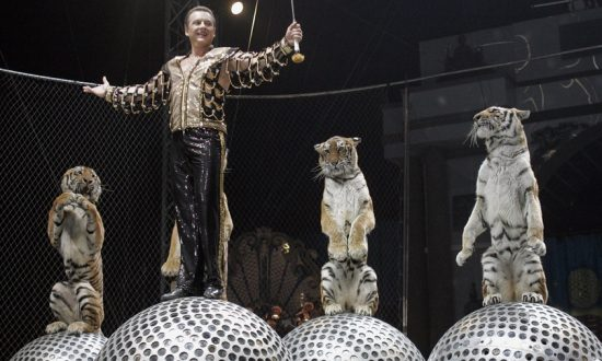 Mayor Bans Circuses in Russia