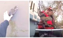 Video: Man Tries to Save Bunnies From Drowning in Flooded River, but They Keep Hopping Away