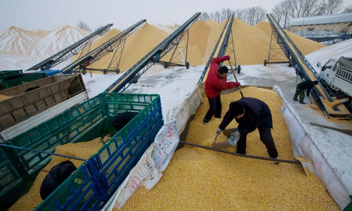 Two farmers unload corn at a state grain reserves depot on December 19, 2008 in Yushu in Jilin Province, China. (China Photos/Getty Images)