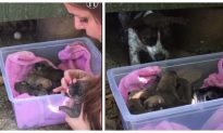 Video: Family Rescues Six Puppies From Under Deck