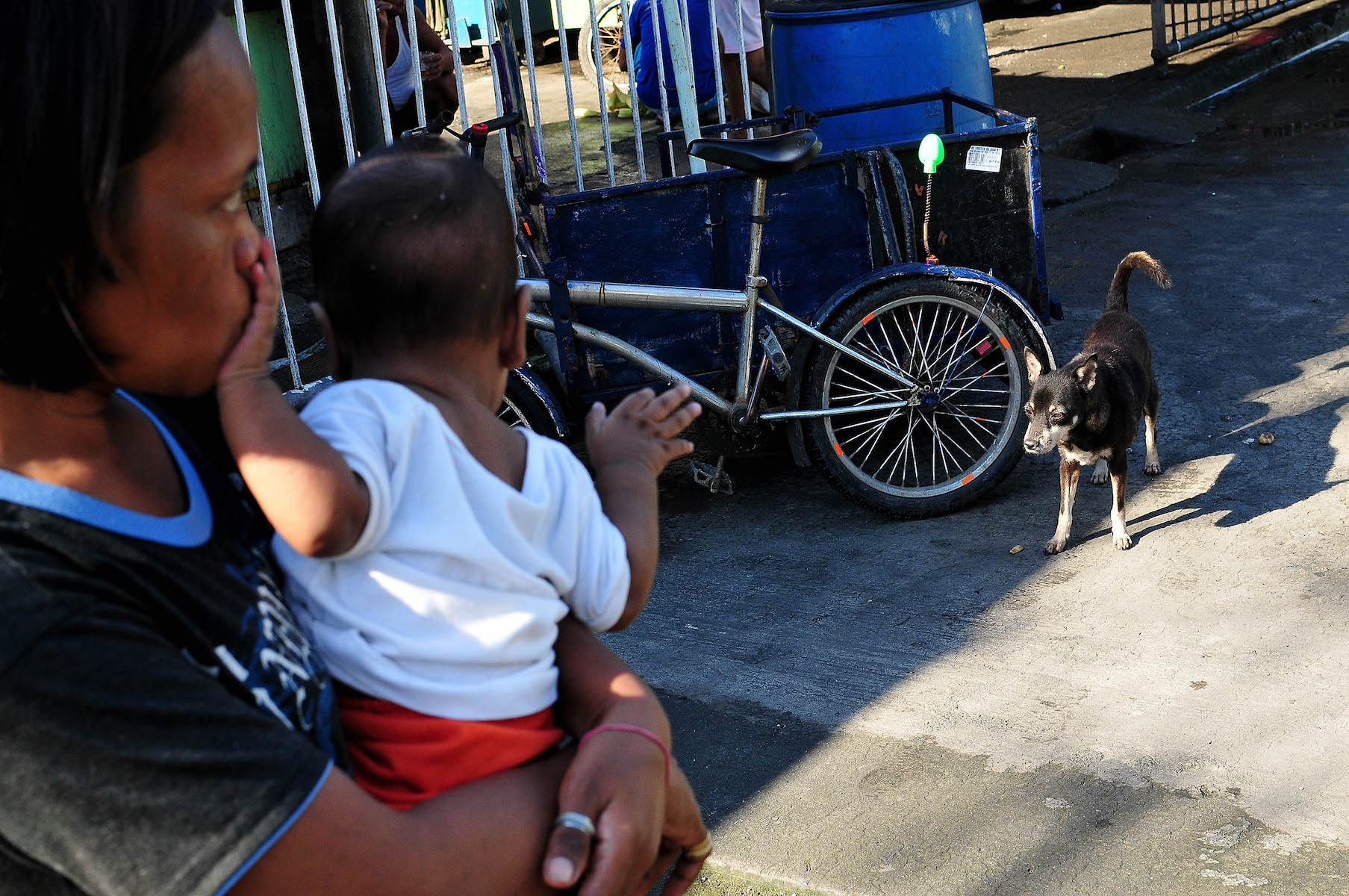 stray dog on world rabies day philippines